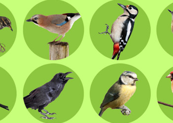 Key Stage 3 Scientists Help with Annual Bird Count